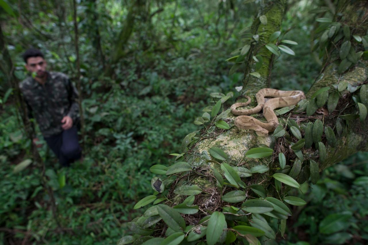 Ilha das cobras3