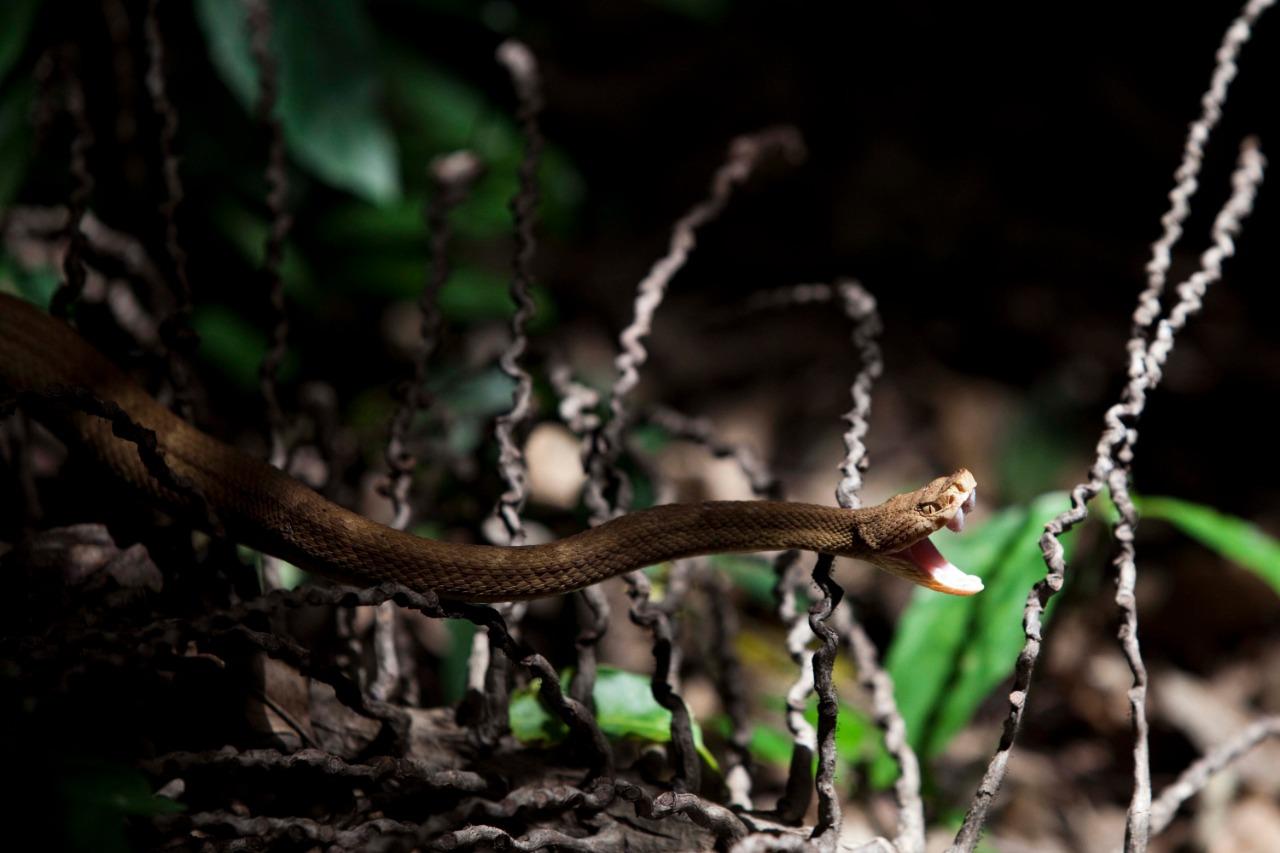 Ilha das cobras9